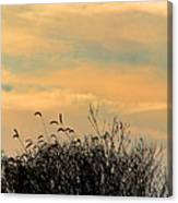 Silhouette Of Grass And Weeds Against The Color Of The Setting Sun Canvas Print