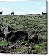 Silhouette Of Twin Peaks Wild Horses Ne California Canvas Print