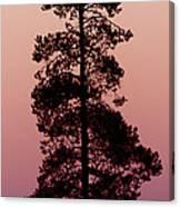 Silhouette Tree At Sunrise Canvas Print