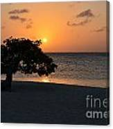 Silhouetted Divi Divi Tree Canvas Print