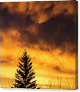 Silhouetted Evergreen Tree Canvas Print