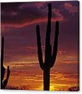 Silhouetted Saguaro Cactus Sunset  Arizona State Usa Canvas Print
