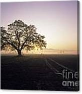 Silhouetted Tree In Field Sunrise Canvas Print