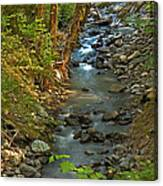 Silky Stream In Rain Forest Landscape Art Prints Canvas Print