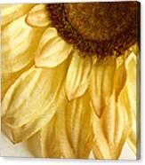 Silky Sun Canvas Print