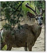 Silly Deer Canvas Print