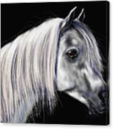 Grey Arabian Mare Painting Canvas Print