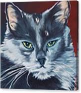 Silver Grey Cat Portrait Canvas Print