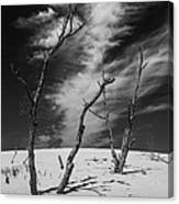 Silver Lake Dune With Dead Trees And Cirrus Clouds In Black And White Canvas Print