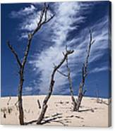 Silver Lake Dune With Dead Trees And Cirrus Clouds Canvas Print