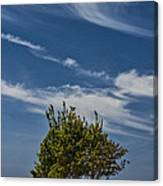 Silver Lake Dune With Tree Grove And Cirrus Clouds Canvas Print