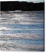 Silver Marsh Canvas Print