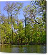 Silver River Florida Canvas Print