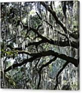 Silver Savannah Tree Canvas Print