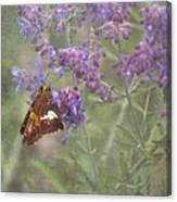 Silver Spotted Skipper Canvas Print
