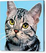 Silver Tabby Kitten Original Painting For Sale Canvas Print