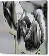 Silver Tulips Canvas Print