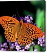 Silver Washed Fritillary Butterfly Canvas Print