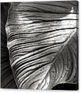 Silvertone Leaf Canvas Print