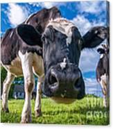 Simply Cows Canvas Print
