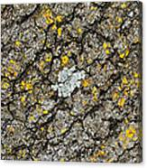 Simply Moss Canvas Print