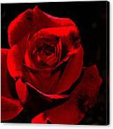 Simply Red Rose Canvas Print