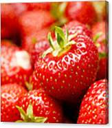 Simply Strawberries Canvas Print
