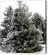 Simply Winter Canvas Print
