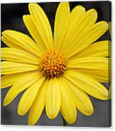 Simply Yellow Canvas Print