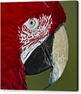 Sinbad... Canvas Print