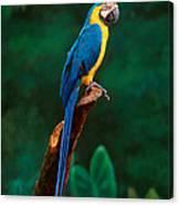 Singapore Macaw At Jurong Bird Park  Canvas Print