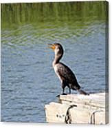 Singing Bird Canvas Print