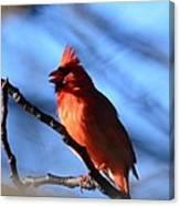 Singing Cardinal Canvas Print