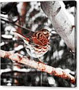 Singing In The Snowfall Canvas Print