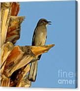 Singing Mockingbird Canvas Print