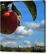 Single Apple Canvas Print