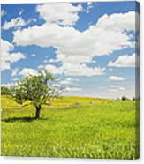 Single Apple Tree In Maine Blueberry Field Canvas Print