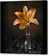 Single Asiatic Lily In Vase Canvas Print