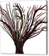 Single Bare Tree Isolated Canvas Print