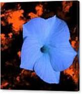 Single Blue Cactus Flower Canvas Print