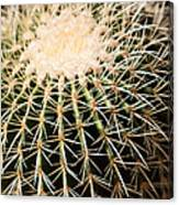 Single Cactus Ball Canvas Print