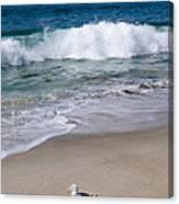 Single Seagull On The Beach Canvas Print