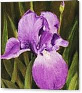 Single Iris Canvas Print