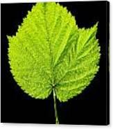 Single Leaf From Raspberry Bush Canvas Print