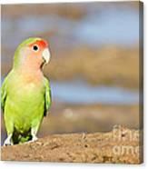 Single Love Bird Seeks Same Canvas Print