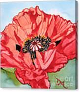Single Oriential Poppy Canvas Print