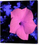 Single Pink Cactus Flower Canvas Print