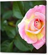 Single Pink Rose Canvas Print