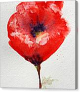 Single Red Anemone Canvas Print