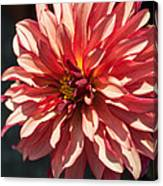 Single Red Bloom Canvas Print